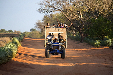 Workers returning from Sisal plantations in tractor and trailer along dirt track, Berenty Private Reserve, southern Madagascar, August 2016.