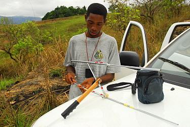 Park biologiss radiotracking mandrills (Mandrillus sphinx). Lop� National Park, Ecosystem and Relict Cultural Landscape of Lop�-Okanda UNESCO World Heritage Site, Gabon.