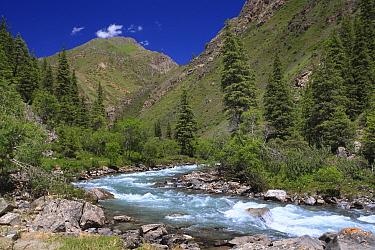 Malyi Naryn river, Inner Tien-Shan Mountains. region, Western Tien-Shan UNESCO Natural World Heritage Site, Kyrgyzstan Republic, June 2016