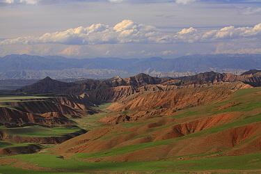 Red bedlands with sheep,  Naryn River Valley, Inner Tien-Shan region, Western Tien-Shan UNESCO Natural World Heritage Site, Kyrgyzstan Republic, June 2016