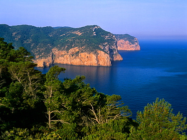 Sea cliffs and Aleppo Pine forests (Pinus halepensis) in Cap des Rubio from Na Xamena, Port of Sant Miquel, Ets Amunts, Ibiza biodiversity and culture UNESCO World Heritage Site, Spain.