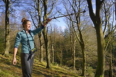 Catherine McNicol radiotracking in mixed Beech and coniferous woodland to locate radio-collared Grey Squirrels (Sciurus carolinensis) in the area where their predators, Pine Martens (Martes martes) ha...