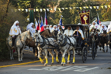 A cardinal in a horse-drawn carriage surrounded by traditionally dressed horse riders during Cuasimodo, a Catholic festival, Colina, Chacabuco Province, Santiago Metropolitan Region, Chile, Latin Amer...