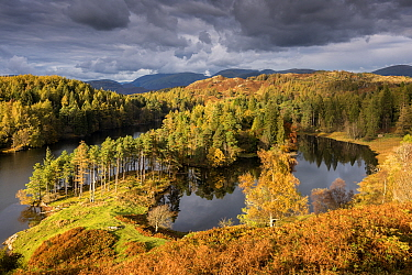 Tarn Hows, late evening light in autumn, near Coniston, The Lake District, Cumbria, UK. October 2016.