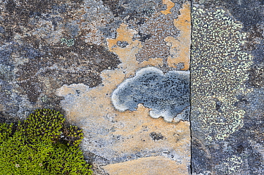 Crustose lichens (Lecanorales) on rocks in Swedish Padjelanta National Park, Laponia World Heritage Site, Sweden. August.  Highly commended in the GDT  European Wildlife Photographer of the Year  com...