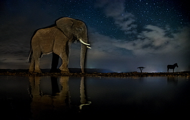 African elephant (Loxodonta africana) and Zebra (Equus quagga) at waterhole at night, Mkuze, South Africa Third place in the Nature Portfolio category of the World Press Photo Awards 2017.
