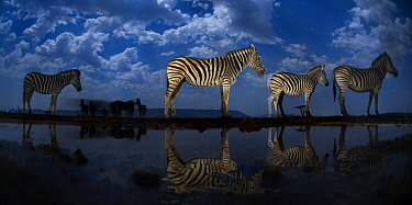 Zebra at waterhole at night, Mkuze, South Africa Third place in the Nature Portfolio category of the World Press Photo Awards 2017.