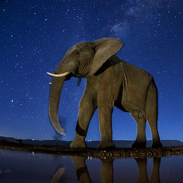 African elephant (Loxodonta africana) at waterhole at night, Mkuze, South Africa Third place in the Nature Portfolio category of the World Press Photo Awards 2017.
