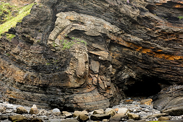 A monocline fold that has been faulted during the Variscan orogeny, in Carboniferous sandstone and shale. Broad Haven, Pembrokeshire, Wales, UK, May