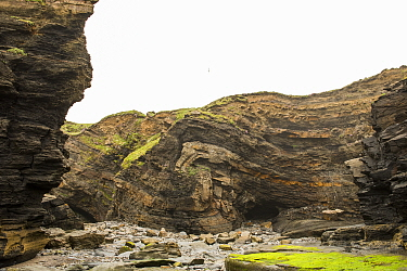 Monocline fold that has been faulted during the Variscan orogeny, in Carboniferous sandstone and shale. Broad Haven, Pembrokeshire, Wales, UK, May