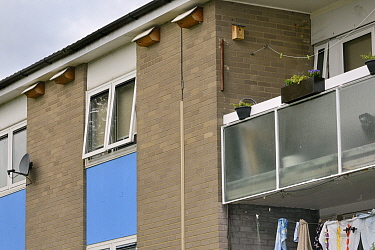 Row of swift nest boxes attached under the eaves of a block of flats, Edgecombe development, Cambridge, UK, July.
