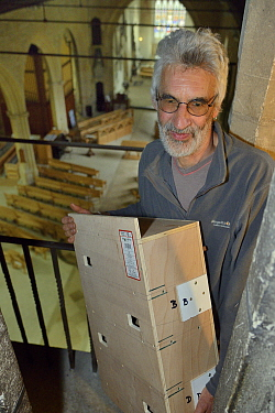 Common swift (Apus apus) nest box carried by Roger Becket into Holy Trinity church to be fitted in the bell tower, Bradford-on-Avon, Wiltshire, UK, June.