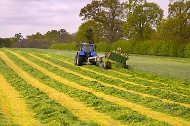 Cutting grass for silage with cutter pulled by tractor, Norfolk, England, UK, May.