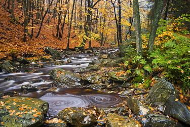 La Hoegne mountain stream in autumn, near Hockai, Belgian Ardennes, November 2007