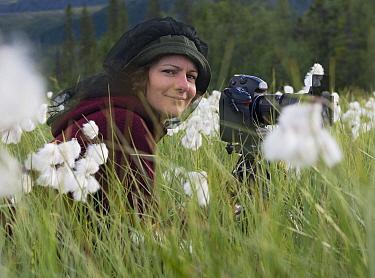 Photographer Orsolya Haarberg photographing flowering Cottongrass (Eriophorum angustifolium). Sjaunja Nature Reserve, Laponia World Heritage Site, Swedish Lapland, Sweden. July 2013.