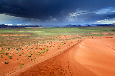 Namibia Desert landscape with rainstorm, viewed from sand dunes,. Namib Rand, Namibia, February 2011.