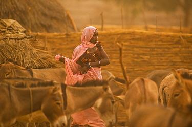 Ouled Rachid tribeswoman with domestic donkeys , Kashkasha village near Zakouma National Park, Chad, 2010.