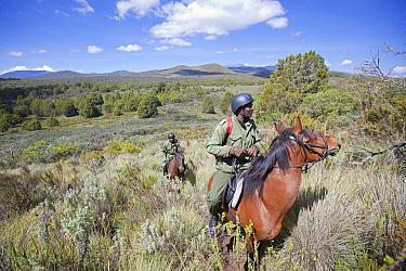 Wildlife poaching patrol unit on horseback, Mount Kenya National Park, Kenya