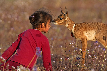 Young girl face to face with Peninsular Pronghorn Antelope (Antilocapra americana peninsularis) fawn at Peninsular Pronghorn recovery project, El Vizcaino Desert Biosphere Reserve, Baja California Pen...