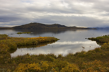 Thingvallavatn, on rift between North American and Eurasian tectonic plates at Thingvellir, Thingvellir National Park, UNESCO World Heritage Site, Iceland. September 2009.  Photographed for the Freshw...