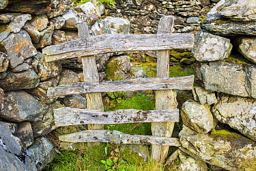 Wooden fence between dry stone wall, Pared-y-cefn-hir, Snowdonia National Park, Wales, UK, August.