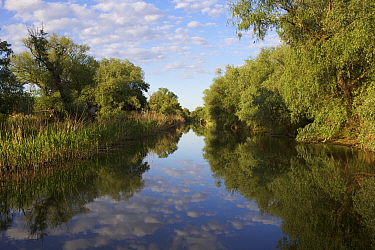 Gallery forest along the channels dominated by mainly Willows (Salix sp.) and Poplars (Populus sp.) Danube Delta Biosphere Reserve,  Danube Delta, Romania May 2015. Photographed for The Freshwater Pro...