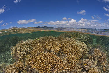 Healthy coral reefs with abundant marine life in tambo or marine protected areas - split level, Nukusa Village, Undu Point, Macuata Province, Fiji, South Pacific