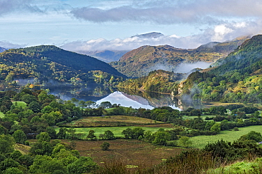 Early morning mist clearing over Llyn Gwynant in the Gwynant Valley looking south west with the summit of Moel Hebog in the background. Snowdonia National Park, North Wales, UK, September 2017