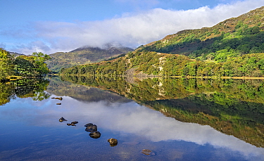 Reflections in Llyn Gwynant in the Glaslyn Valley looking west, with Yr Aran mountain in the background. Snowdonia National Park, North Wales, UK, September 2017