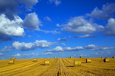 Straw stubble and bales after harvest, Northrepps Village, Norfolk, England, UK, August
