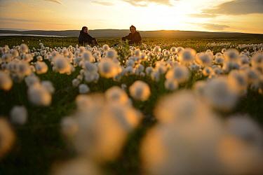 Photographer Sandra Bartocha with Werner Bollmann in field of cottongrass (Eriophorum angustifolium)