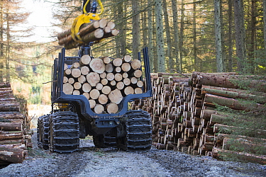 Truck hauling freshly cut timber for biofuel in Grizedale forest, Lake District, England, UK, May 2013.