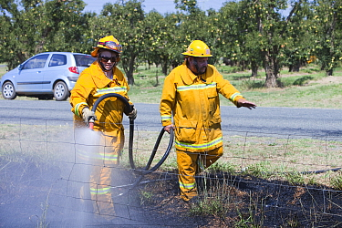 CFA fire fighters tackling a roadside fire near Shepperton, Victoria, Australia, probably started by a motorist throwing a cigarette out of the window. This image was taken during the drought which 15...