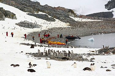 Gentoo penguins (Pygoscelis papua) with members of an expedition cruise ship. Curverville Island, Antarctic Peninsula.