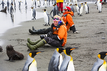 King penguins (Aptenodytes patagonicus), with passengers from an expedition cruise. Salisbury Plain, South Georgia Islands.