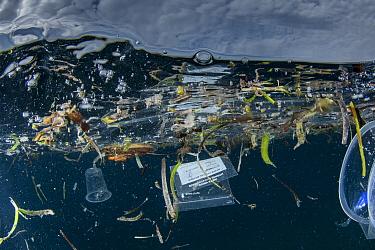 Discarded plastic floating in the sea, Lesser Sunda Islands, Indonesia