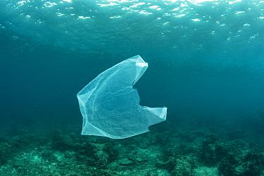 Plastic bag floating in the ocean, Lesser Sunda Islands, Indonesia