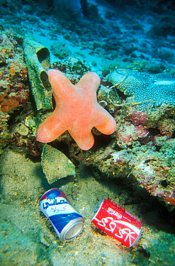 Granular starfish (Choriaster granulatus) near discarded drinking cans, North Male Atoll, Maldives, Indian Ocean.