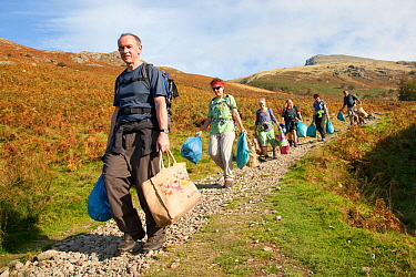 Litter picking volunteers carrying bags of rubbish take part in Flora of the Fells conservation day. Helvellyn, Lake District National Park, Cumbria, September. Did you know? The amount of litter we d...