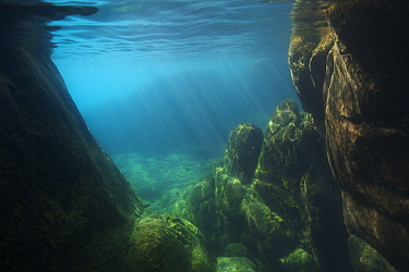 Underwater view of Lake Malawi, Malawi, Photographed for The Freshwater Project.