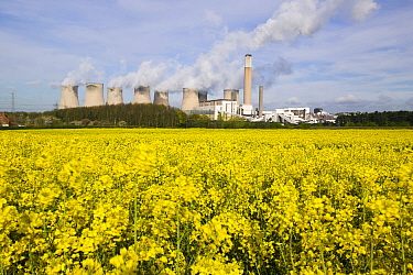 Ratcliffe on Soar, a massive coal powered power station in Nottinghamshire, with field of oilseed rap in foreground, UK, May 2008.