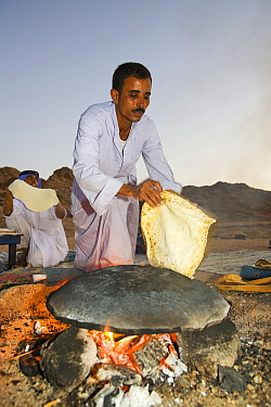 Bedouin man cooking bread on an open fire, Sinai Desert, Dahab,  Egypt. October 2008.