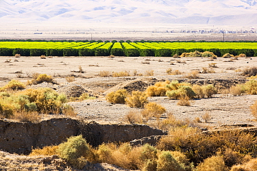 Image showing contrast between irrigated agricultural land and unirrigated surrounding land during severe drought, Califonia, USA, September 2014.