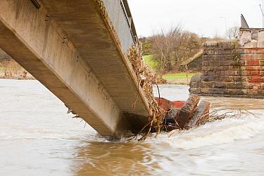 Footbridge over the River Derwent, collapsed during flooding, Workington, England, UK, November 2009.