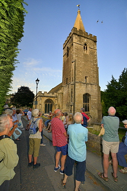 People watching Swifts (Apus apus) flying around Holy Trinity church during a swift walk organised by the local swift group, Bradford-on-Avon, Wiltshire, UK, June. Digital composite. Model released.
