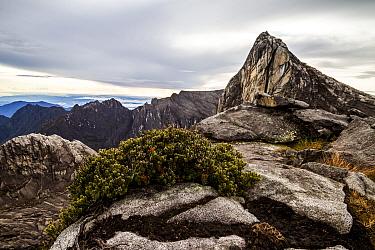 Ugly sister peak (4032m), Mount Kinabalu, Borneo, May 2013.