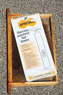Apistan used to combat the Varoa mite in  bee hives, Cockermouth, Cumbria, England, UK. June 2009.