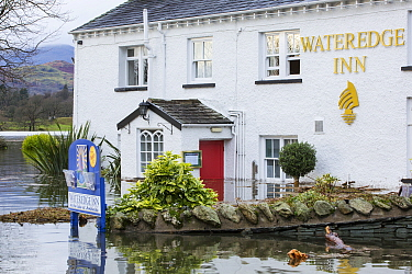 The Wateredge Inn surrounded by flood water after Lake Windermere burst its banks in Ambleside in the Lake District on Sunday 6th December 2015, after torrential rain from storm Desmond. England, UK,...