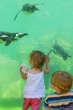 Toddlers watching Magellanic Penguins (Spheniscus magellanicus) swimming underwater at Zoo, UK, May 2008. Model released.