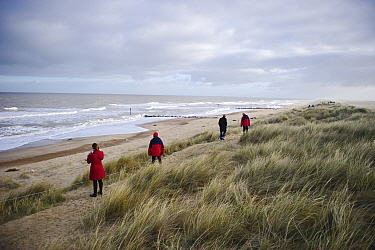 Visitors viewing Grey Seal colony at Winterton Dunes, Norfolk, December 2010